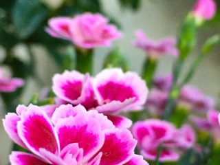 Blog-teisho 6 - De bloemen op het veld